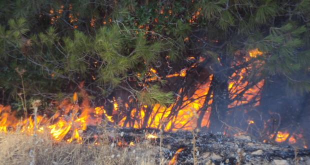 La foret de Tenira  un poumon écologique environnemental  de la région ravagé par le feu.