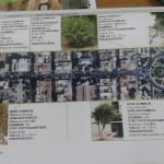 Le barbare s'acharne sur les arbres de la ville de Sidi Bel Abbes !