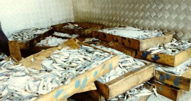 La police de Sidi Bel Abbes saisie 234 kg de poisson impropre à la consommation .