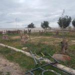 Le phénomène de l'abattage clandestin des arbres à Sidi Bel Abbés continue!!!