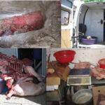 كانت تعرض للبيع في ظروف غير صحية وموجهة للإستهلاك البشري  قوات الشرطة بأمن دائرة تلاغ تحجز أكثر من 03 قناطير من اللحوم الفاسدة