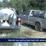 A.P.O.C.E Sidi Bel Abbés , dénonce fermement le gaspillage du lait !