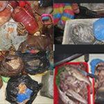 كانت موجهة لغرض الإستهلاك بأحد المطاعم  شرطة سيدي بلعباس تحجز أكثر من 10 قناطير من الأسماك الفاسدة